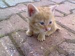 allaha emanet duruo ln kedi:D ama gözler mavişşş