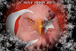 Beşiktaş+kartallarımız